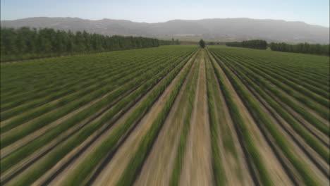 Antena-De-Helicóptero-De-Un-Viñedo-En-El-Valle-De-Salinas-California-1