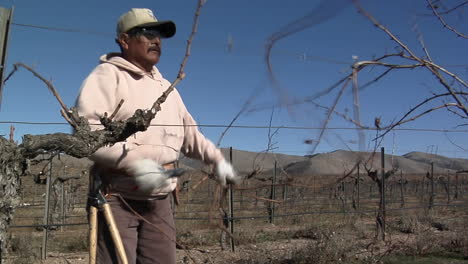 A-field-worker-prunes-dormant-vines-in-a-California-vineyard
