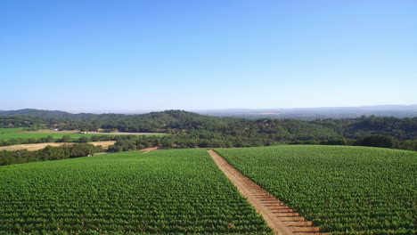 Eine-Antenne-über-Weinbergen-In-Sonoma-County-In-Nordkalifornien