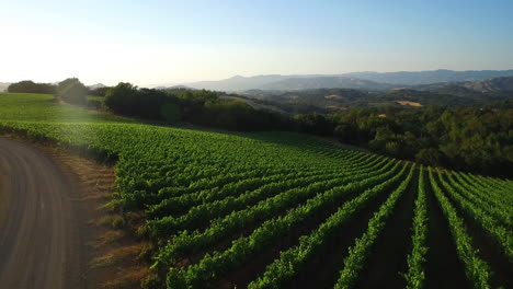 An-low-aerial-over-vast-rows-of-vineyards-in-Northern-California-s-Sonoma-County-1