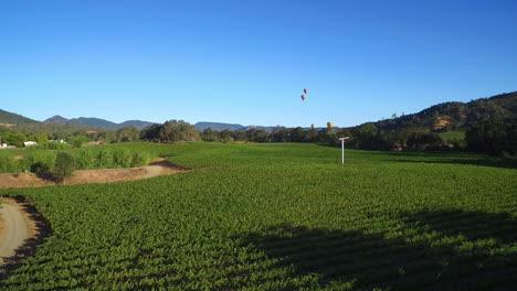 Eine-Niedrig-Ansteigende-Antenne-über-Reihen-Von-Weinbergen-Im-Nordkalifornischen-Sonoma-County-Mit-Heißluftballons-In-Der-Ferne