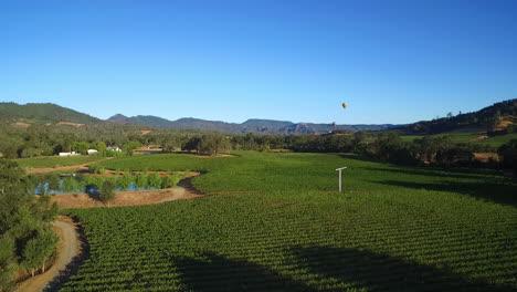 Eine-Niedrig-Ansteigende-Antenne-über-Reihen-Von-Weinbergen-Im-Nordkalifornischen-Sonoma-County-Mit-Heißluftballons-In-Entfernung-2