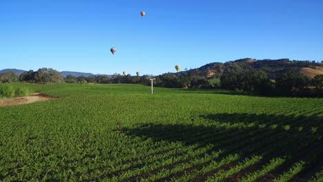 Eine-Niedrig-Ansteigende-Antenne-über-Reihen-Von-Weinbergen-Im-Sonoma-County-In-Nordkalifornien-Mit-Heißluftballons-In-Entfernung-3
