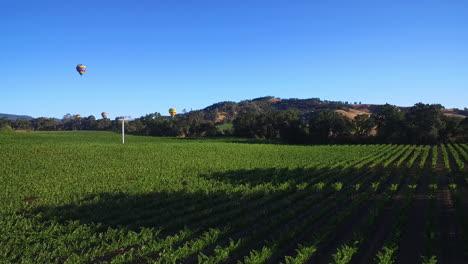 Eine-Niedrig-Ansteigende-Antenne-über-Reihen-Von-Weinbergen-Im-Nordkalifornischen-Sonoma-County-Mit-Heißluftballons-In-Entfernung-4