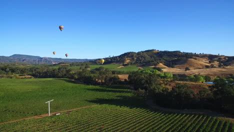 Eine-Hohe-Antenne-über-Reihen-Von-Weinbergen-In-Sonoma-County-In-Nordkalifornien-Mit-Heißluftballons-In-Der-Ferne