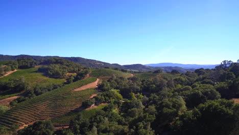 Eine-Hochantenne-über-Reihen-Von-Weinbergen-Im-Sonoma-County-In-Nordkalifornien-Mit-Heißluftballons-In-Entfernung-1