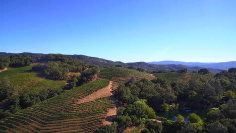 A-high-aerial-over-rows-of-vineyards-in-Northern-California-s-Sonoma-County-with-hot-air-balloons-in-distance-2