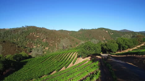 An-aerial-along-a-hillsideover-rows-of-vineyards-in-Northern-California's-Sonoma-County-1
