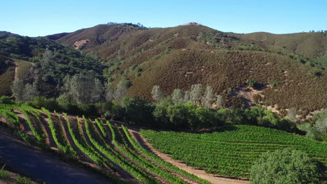An-aerial-along-a-hillsideover-rows-of-vineyards-in-Northern-California-s-Sonoma-County-2