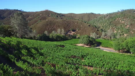 A-side-view-aerial-along-a-hillside-over-rows-of-vineyards-in-Northern-California-s-Sonoma-County