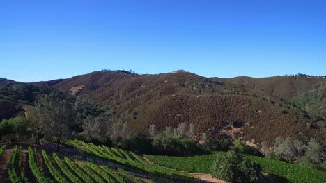 Eine-Seitenansicht-Antenne-Entlang-Eines-Hügels-über-Reihen-Von-Weinbergen-In-Sonoma-County-In-Nordkalifornien-1