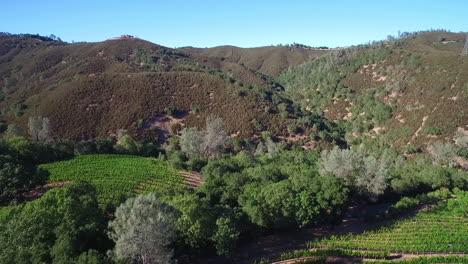Eine-Seitenansicht-Antenne-Entlang-Eines-Hügels-über-Reihen-Von-Weinbergen-In-Sonoma-County-In-Nordkalifornien-2