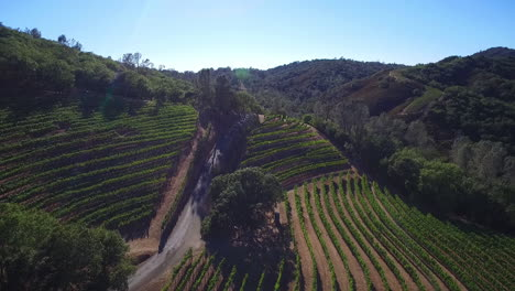 A-side-view-aerial-along-a-hillside-over-rows-of-vineyards-in-Northern-California-s-Sonoma-County-3