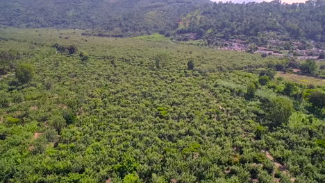 Aerial-over-the-jungles-of-Guatemala