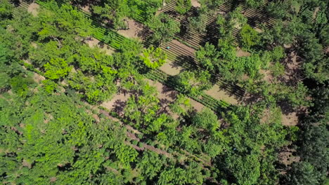 Aerial-over-the-jungles-villages-and-farm-fields-of-Guatemala-2