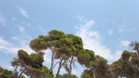 Mallorca-Bosque-01