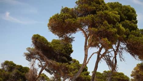 Mallorca-Bosque-02