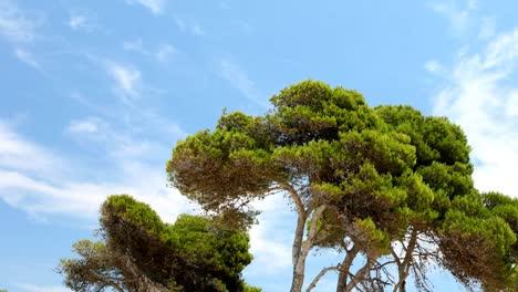 Mallorca-Bosque-06