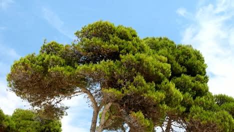 Mallorca-Bosque-07