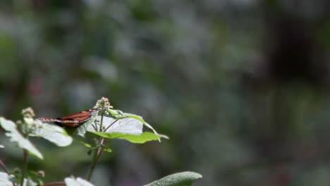 Mariposa-21