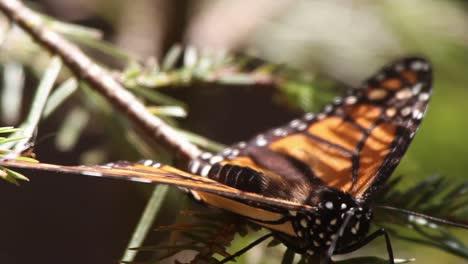 Mariposa-65