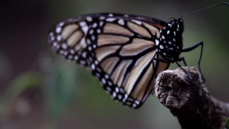 Mariposa-84