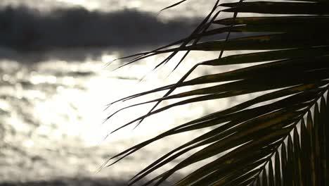 Mazatlan-Palms-01