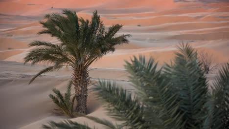Merzouga-Sahara-Desert-01