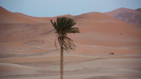 Merzouga-Sahara-Desert-03