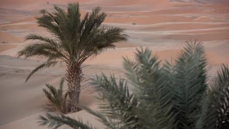 Merzouga-Sahara-Desert-04