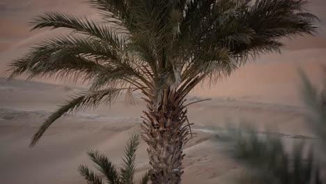 Merzouga-Sahara-Desert-05
