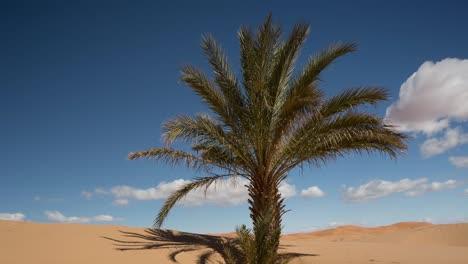 Merzouga-Sahara-Desert-07