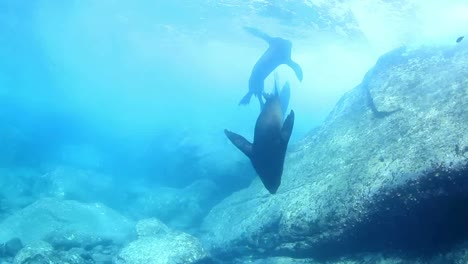 Mexico-Diving-0-05