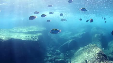 Mexico-Diving-0-22