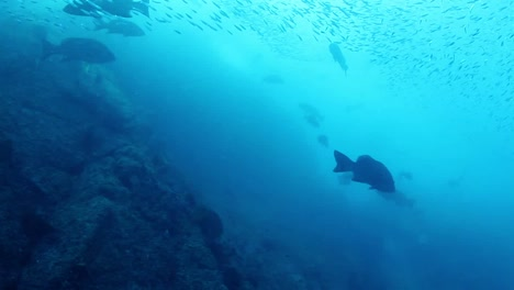 Mexico-Diving-0-26