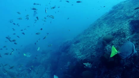 Mexico-Diving-0-27