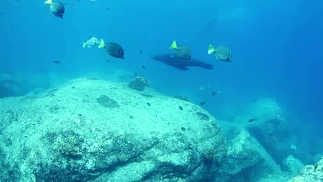 Mexico-Diving-0-37