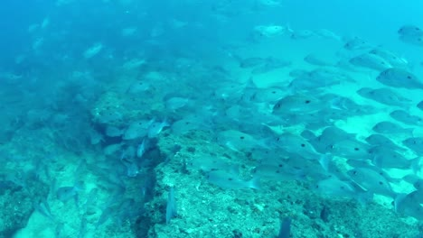 Mexico-Diving-0-41
