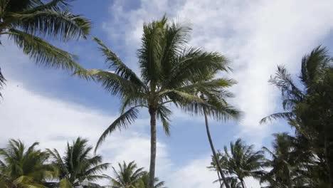 Miami-Palms-01