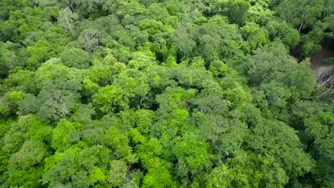 An-aerial-over-generic-rainforest-or-jungle