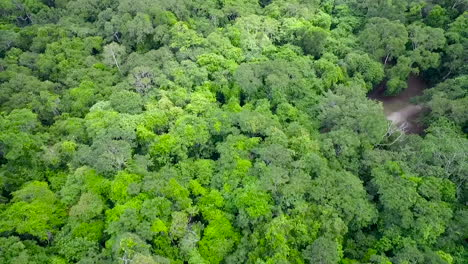 Spectacular-aerial-shot-over-the-treetops-and-Tikal-pyramids-in-Guatemala-2