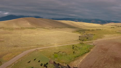 Amazing-aerial-over-a-western-cattle-drive-on-the-plains-of-Montana-2