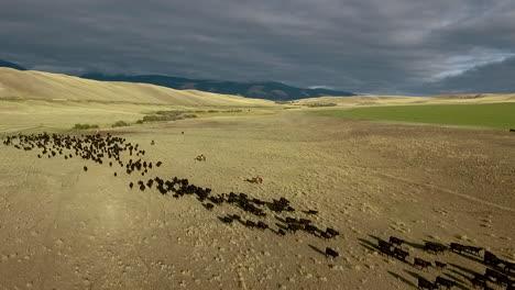 Erstaunliche-Luftaufnahme-über-Einem-Western-Cattle-Drive-In-Den-Ebenen-Von-Montana-9
