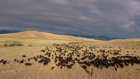 Amazing-aerial-over-a-western-cattle-drive-on-the-plains-of-Montana-10