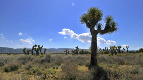 Time-lapse-of-some-clouds-blowing-with-Joshua-trees-in-the-foreground