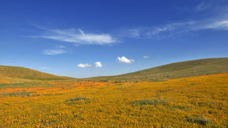 Time-lapse-of-clouds-blowing-over-poppy-fields