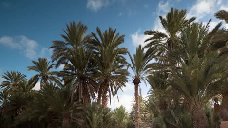 Oasis-Palms-01