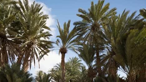 Oasis-Palms-02