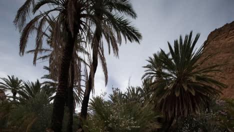 Oasis-Palms-05