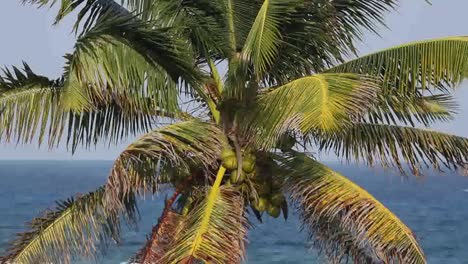 Palm-Closeup0